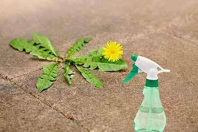 یک افشانه با قوطی سبز رنگ بر روی زمین در کنار یک گل زرد رنگ با برگهای سوزنی سبز