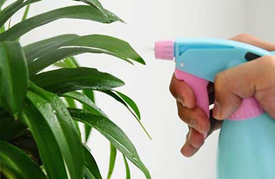 دستی در حال اسپری کردن به یک گیاه با یک افشانه آبی و صورتی